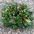 Christmas Holly Wreath 8